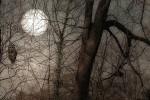 Nachteulen