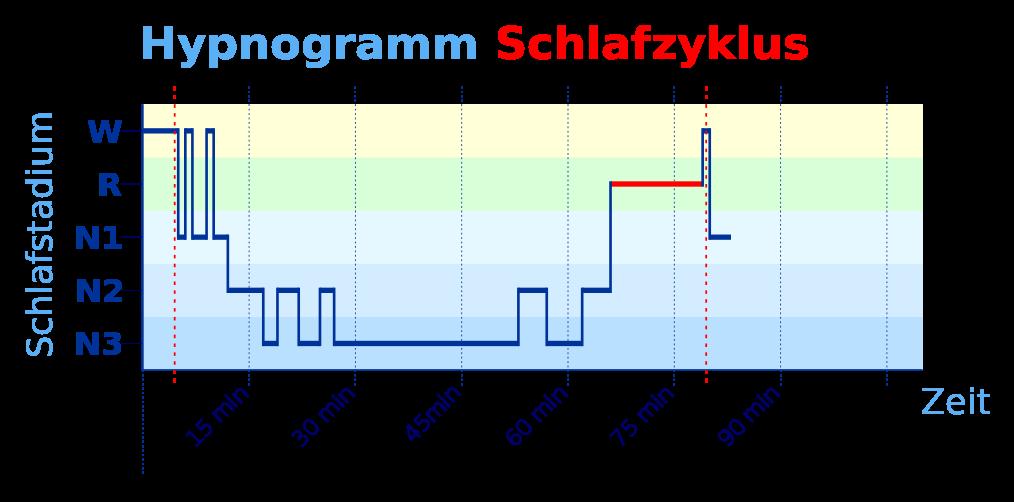 Schlafphasen Diagramm